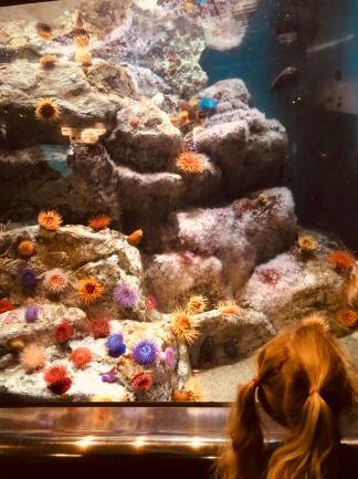 Ein Strauß Seeigel